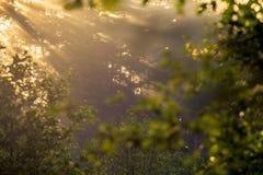 Sunrise beams through mist stock images