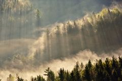 Sunrise beams over fog in the Bohemian Switzerland Stock Images