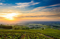 Sunrise at Beaujolais vineyards, Beaujolais, France Stock Image