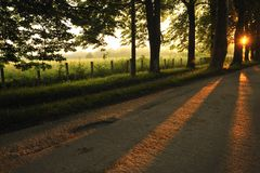 Sunrise in beautiful alley Royalty Free Stock Photography