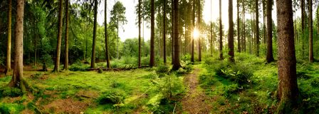 Sunrise in a beautiful forest stock images