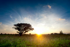 Sunrise with beautiful green Royalty Free Stock Images