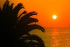 Sunrise. Beautiful sunrise at sea with the palm royalty free stock image