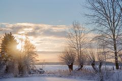 Sunrise on a beautiful winter morning in the countryside, rural. Landscape with bare trees in the snow, copy space Royalty Free Stock Photos