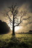 Sunrise behind dead leafless tree Stock Photography