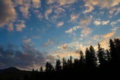 Sunrise behind the firs Stock Photos