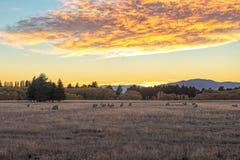 Sunrise behind grass land Royalty Free Stock Image
