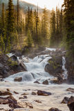 Sunrise behind Kicking Horse Rive. Light filtering through the trees behind a small waterfall on the Kicking Horse River in Yoho National Park, British Columbia Stock Image