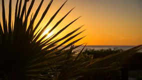 Sunrise behind a palm leaf Royalty Free Stock Photography