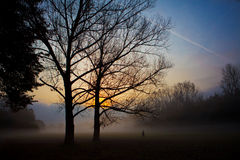 Sunrise behind silhuette of trees Stock Image