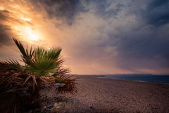 Sunrise behind a small palm tree on a beach in Almería Spain. Sunrise behind a small palm tree on a beach in Almería Spain stock images
