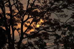 Sunrise behind tree Stock Photography