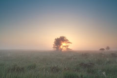 Sunrise behind tree on misty marsh Royalty Free Stock Photography