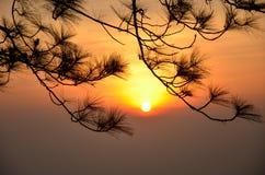 Sunrise Behind tree Stock Photo