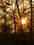 Sunrise behind trees Royalty Free Stock Photo