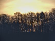 Sunrise behind trees and hill royalty free stock images