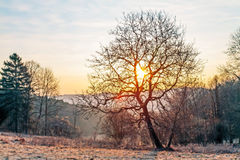 Sunrise behind the Trees. Landscape Picture from Bavaria. Taken in March. Shot of a tree in front of a cold sunrise Stock Photo
