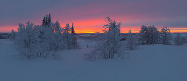 Sunrise beyond the Arctic Circle. Sunrise in the Russian Arctic Circle after the polar night Royalty Free Stock Photography