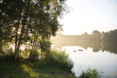 Sunrise and birchtrees at lake. Summer sunrise with morning fog, ducks and birchtrees at the lake Royalty Free Stock Images