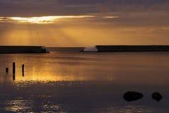 Sunrise with bird Royalty Free Stock Image