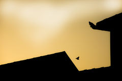 Sunrise and bird on the roof Royalty Free Stock Images