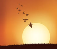 Sunrise with birds Stock Photos