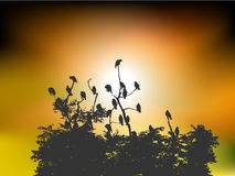 Sunrise with birds. In silhouette royalty free illustration
