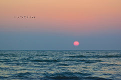 Sunrise and birds, on the Black Sea shore Stock Images