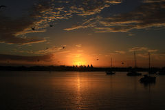Sunrise and birds Royalty Free Stock Images