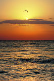 Sunrise birds stock photos