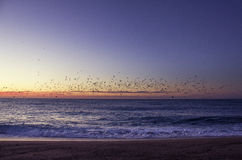 Sunrise with birds Stock Photography