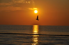 Seagull in the sunrise at the Black See Royalty Free Stock Images