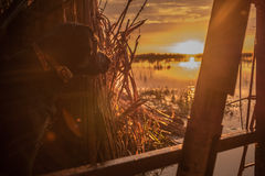 Sunrise from the blind. Dog watching sunrise from duck blind stock photography