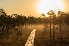 Sunrise in bog boardwalk stock image