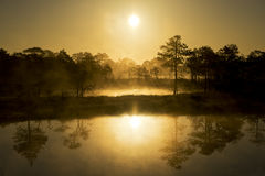 Sunrise. In the bog, golden marsh, lakes and nature Stock Photos