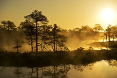 Sunrise. In the bog, golden marsh, lakes and nature Stock Images
