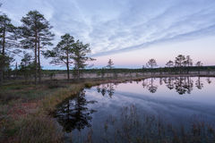 Sunrise in the bog. Icy cold marsh. Frosty ground. Swamp lake and nature. Freeze temperatures in moor. Muskeg natural environment. Royalty Free Stock Photo
