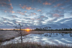 Sunrise in the bog. Icy cold marsh. Frosty ground. Swamp lake and nature. Freeze temperatures in moor. Muskeg natural environment. Stock Photography