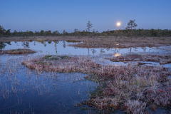 Sunrise in the bog. Icy cold marsh. Frosty ground. Swamp lake and nature. Freeze temperatures in moor. Muskeg natural environment. Royalty Free Stock Images