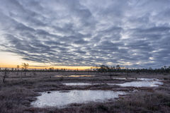 Sunrise in the bog. Icy cold marsh. Frosty ground. Swamp lake and nature. Freeze temperatures in moor. Muskeg natural environment. Stock Photo