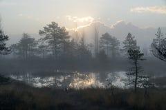 Sunrise in the bog landscape. Misty marsh, lakes nature environment background. Sunrise in the bog landscape. Misty marsh, lakes nature environment background royalty free stock photo