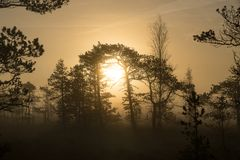 Sunrise in the bog landscape. Misty marsh, lakes nature environment background. Sunrise in the bog landscape. Misty marsh, lakes nature environment background royalty free stock photos