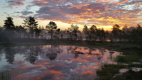 Sunrise in the bog. Tree reflections on the bog lake during sunrise royalty free stock photo