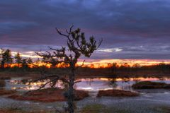 Sunrise on bogs Royalty Free Stock Photos
