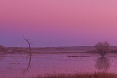 Sunrise at Bosque del Apache NWR. A beautiful sunrise reflection at Bosque del Apache NWR in New Mexico stock photos