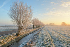Sunrise in Boterhuispolder. Hoarfrost covers the trees and land in the Boterhuispolder of Leiderdorp, the Netherlands Royalty Free Stock Photography