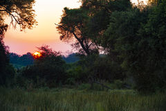Sunrise, Botswana. Sunrise over bush, Okavango Delta, Botswana, Africa Royalty Free Stock Photography
