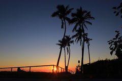 Sunrise at the bottom of palm trees stock image
