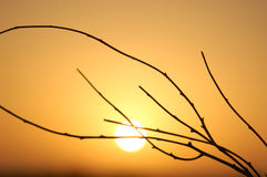 Sunrise and branch Royalty Free Stock Photos