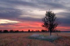Sunrise in the buckwheat field Royalty Free Stock Photos